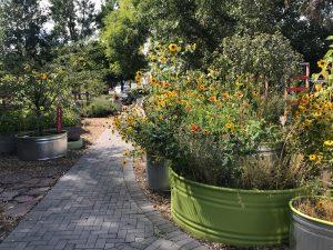 flowers along learning garden path